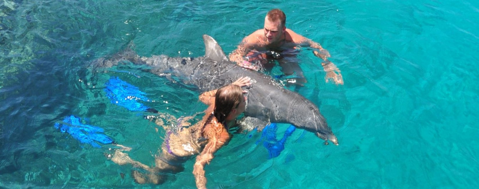 Dolfin swim Curacao included Beach & Transfer