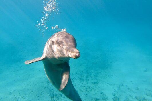 Mit Delfinen schnorcheln