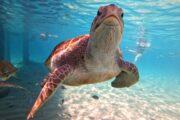 Sea turtles Curacao