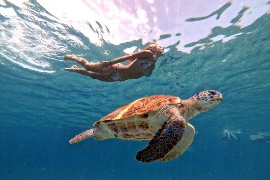 Curacao Dreams