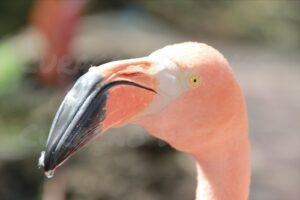 Bild 12 Flamingos Curacao
